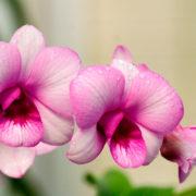 orchidee Ciavattini garden