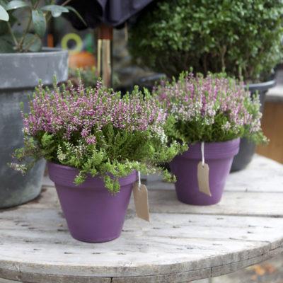 rinvaso piante da Ciavattini garden Ancona