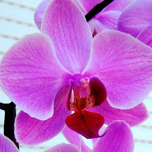 giardinaggio orchidee