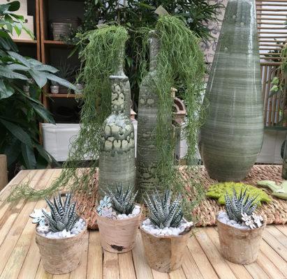 piante grasse Ciavattini Garden