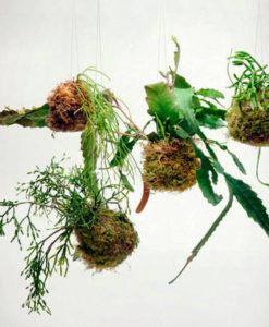 corso di kokedama giardinaggio Ciavattini Garden