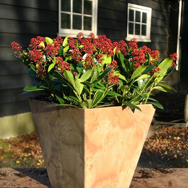 Giardinaggio piante da esterno e fiorite Ciavattini Garden