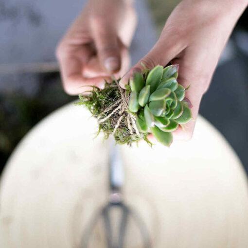 Prepariamo un Kokedama Ciavattini Garden Ancona