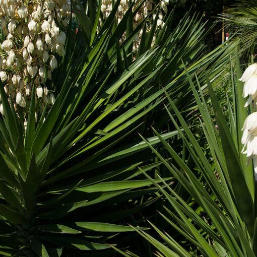Piante grasse succulente e cactacee Ciavattini garden