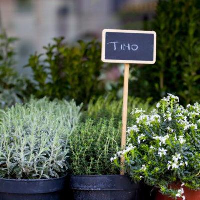 erbe aromatiche e officinali Ciavattini Garden