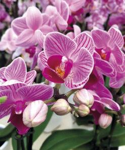 corso giardinaggio orchidee